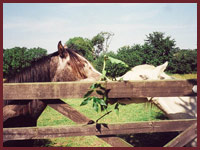 The horses at Parc Llwyd