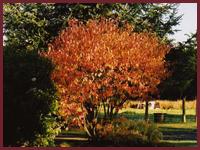 Autumn at Parc Llwyd